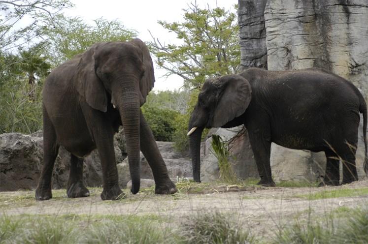 conservation, elephants.
