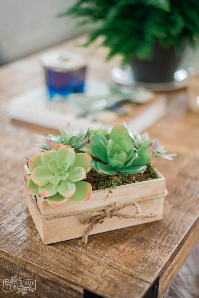 Dollar store succulent box