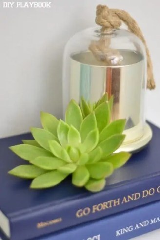 Succulent-on-Books