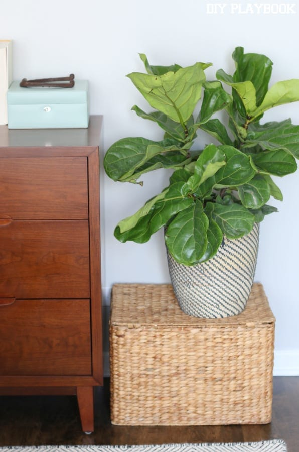Our Favorite Indoor Plants