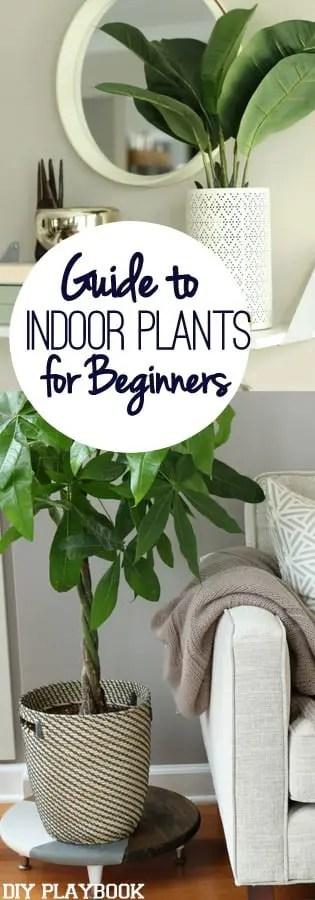 Guide to Indoor Plants