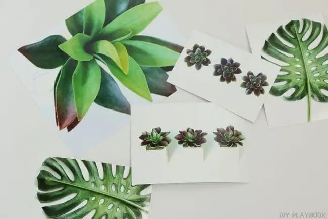 succulent_palm_free_printable_gallery_wall-007