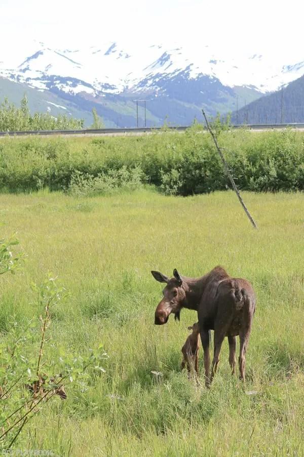 Alaska_travel-8