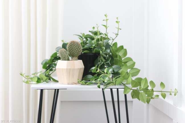 hairpin_table_tutorial_plant-6