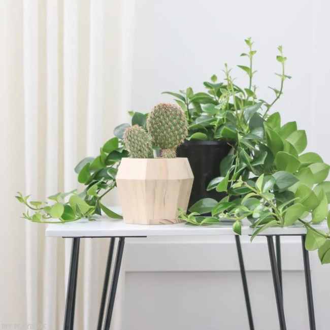 hairpin_table_tutorial_plant-9