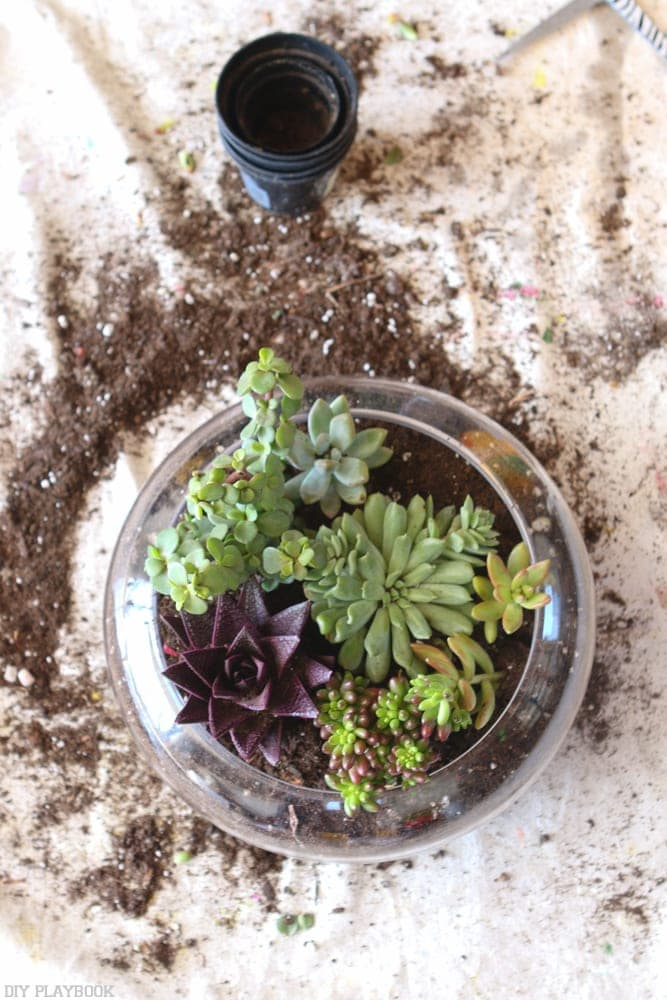 Make your Own DIY Terrarium