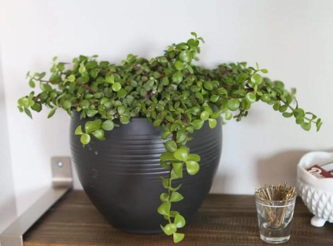 plant-bathroom
