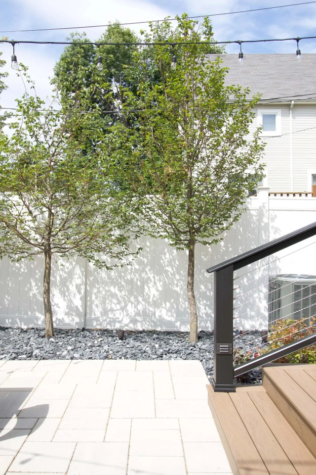 Adding hornbeam trees to our yard