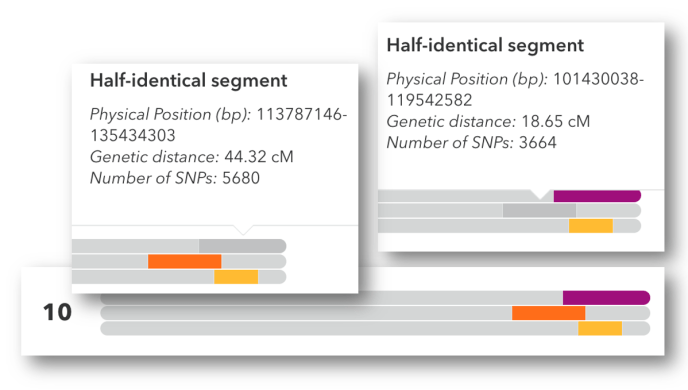 Image of a chromosome browser showing the start and stop points for two overlapping segments.