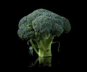 A stalk of broccoli against black background.