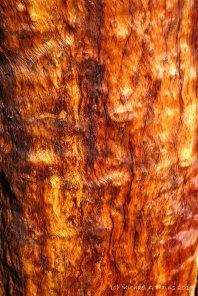Pilbara 2015 - 0157