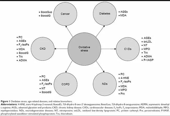 Graphic of relationship oxidative stress to chronic illness 650 x 443)