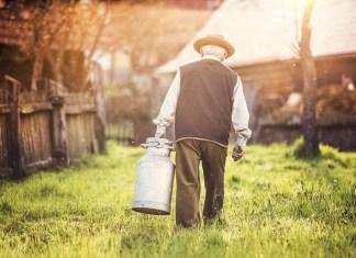 senior farmer with kettle full of milk 1500 x 998