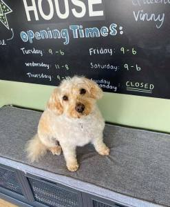 dog grooming customers