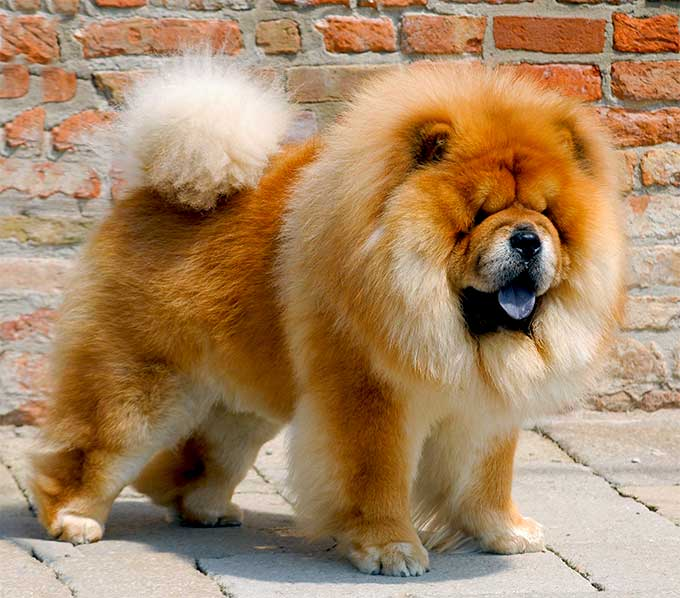 Dog Breed Names History Quality Line Pet Products
