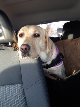 Back Seat driver. (Not taken while actually moving)