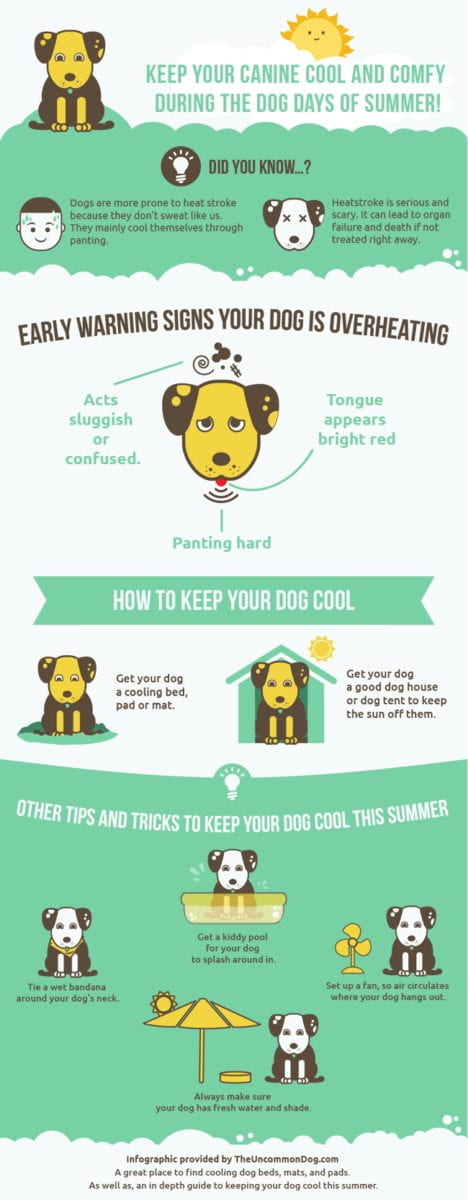 infographic dogs and heat