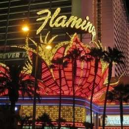 Flamingo Hotel - Scintillating