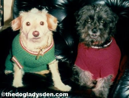 Thoughts on Dog Breeding, The Doglady's Den