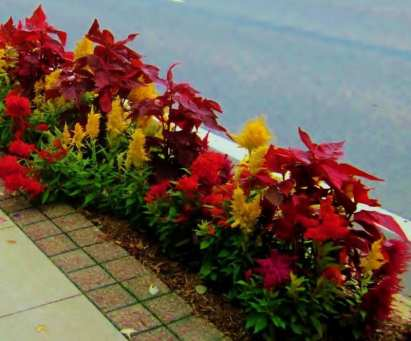Curbside Flowers, Frankenmuth SATURATION | PHOTO FRIDAY