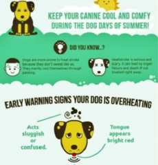 HOT HOT HOT - How to keep your pets cool in summer