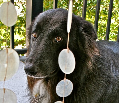 About Black Dog Syndrome