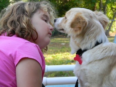 Adopting a Heartworm Positive Dog and What you Didn't Know