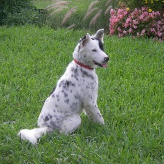 Raj, the Wonder Dog~Adopted