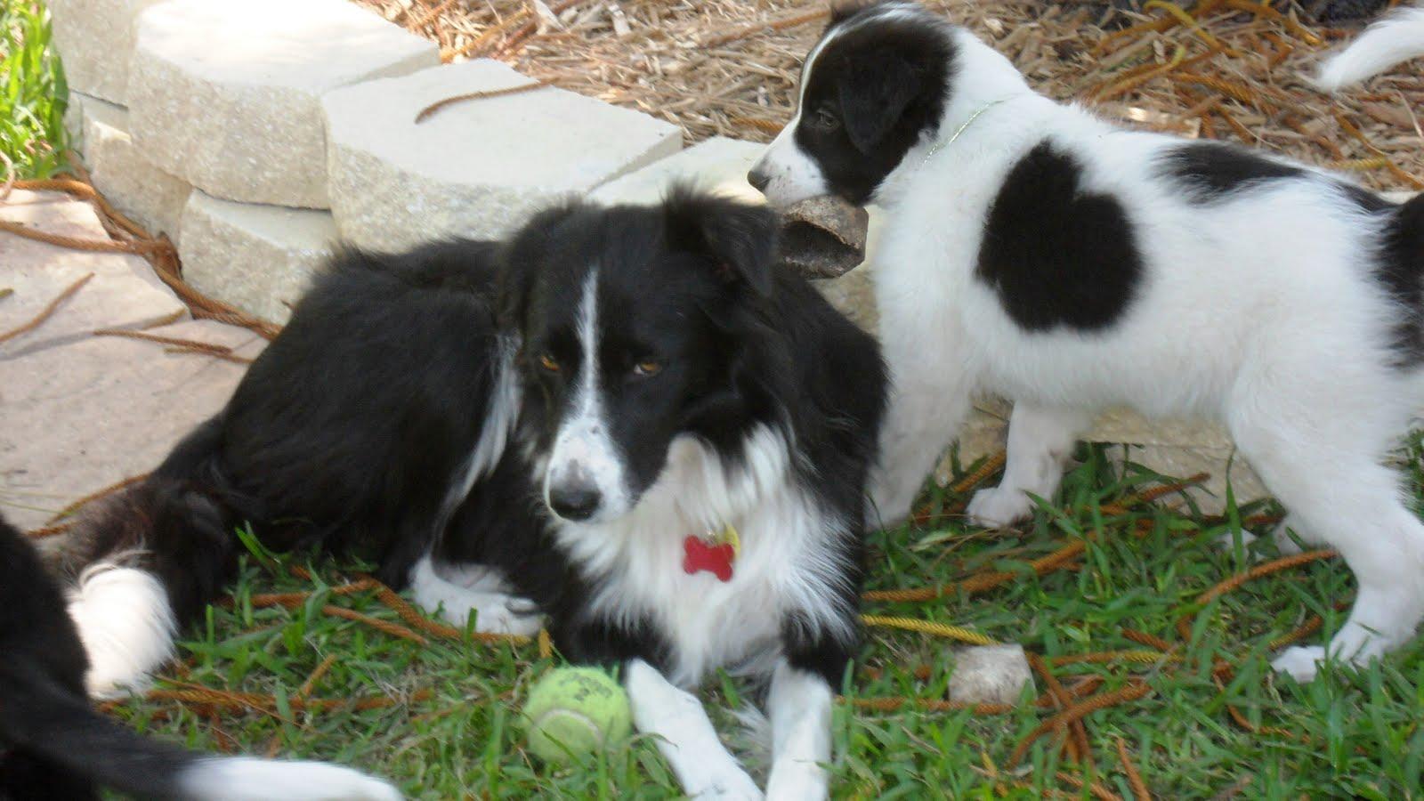 Katie's Puppies, Ready to start their adventure!
