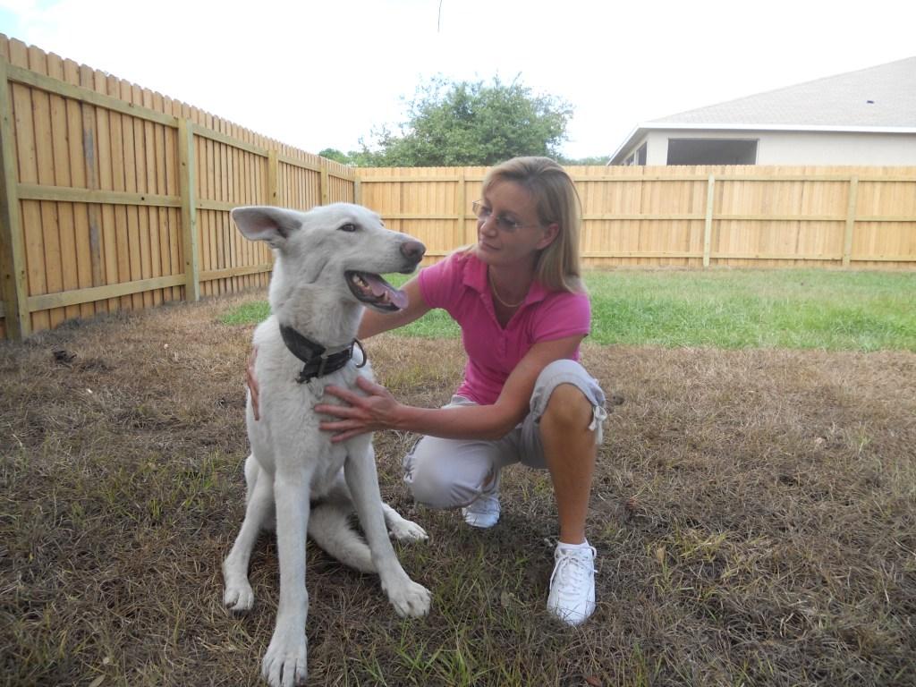 Echo the White Shepherd ~ Adopted