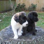 Every puppy loves to sit on a stump!