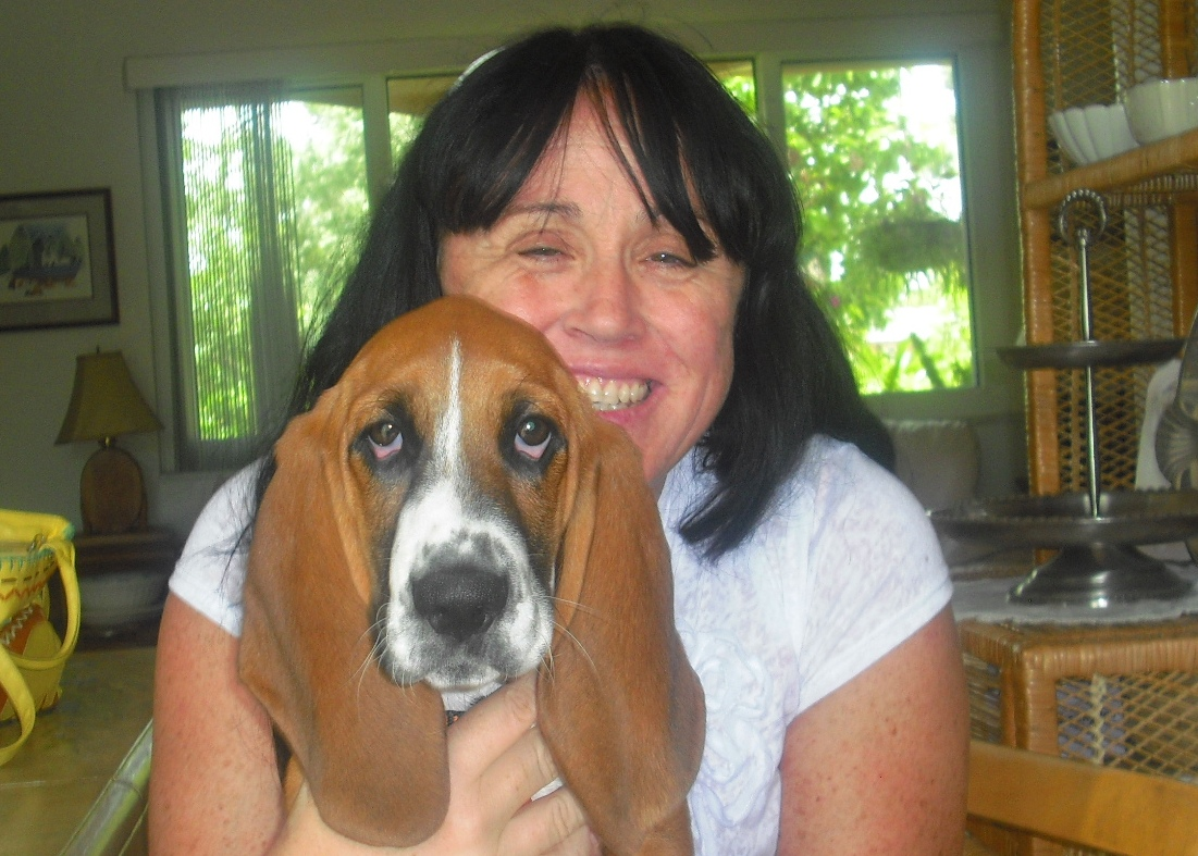 Jedediah the Basset Puppy ~ Adopted