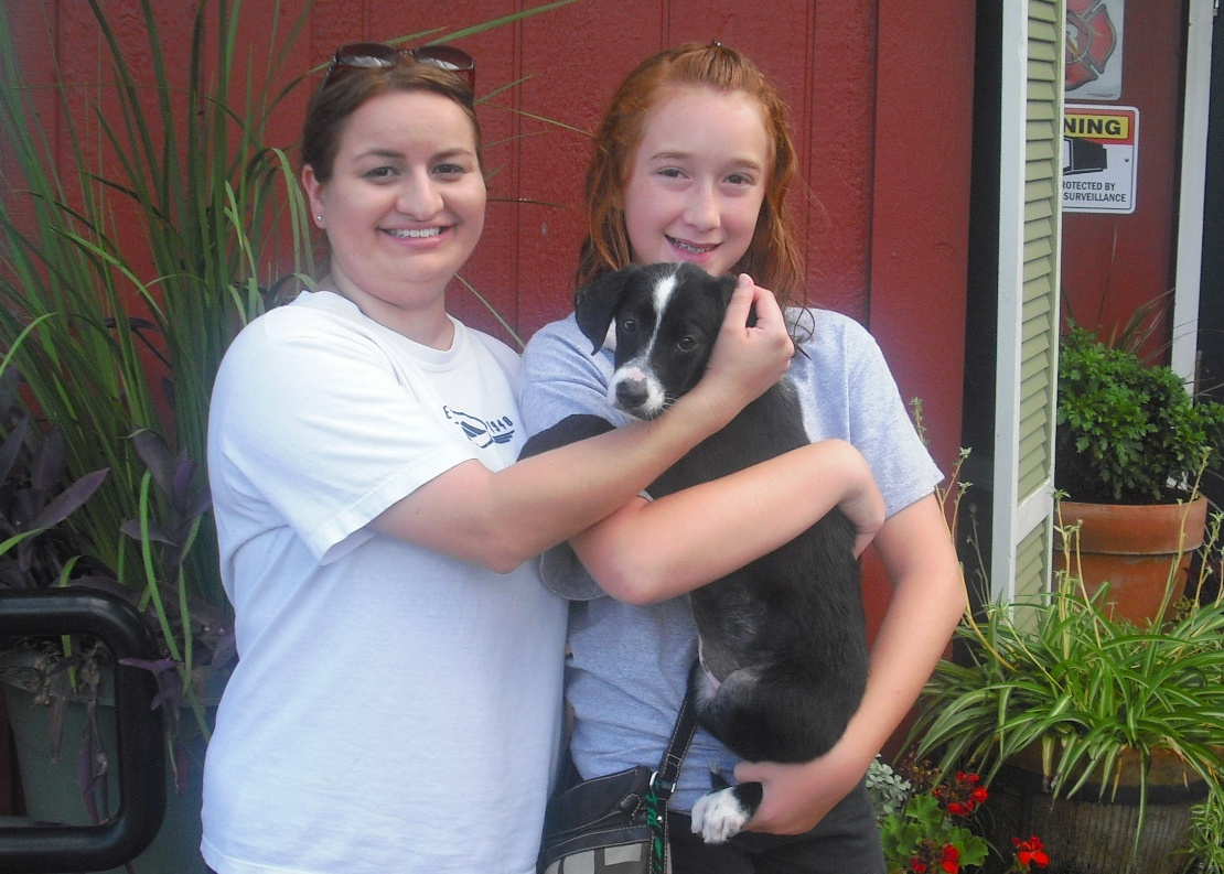 Twinkie the Bernese Collie Puppy ~ Adopted