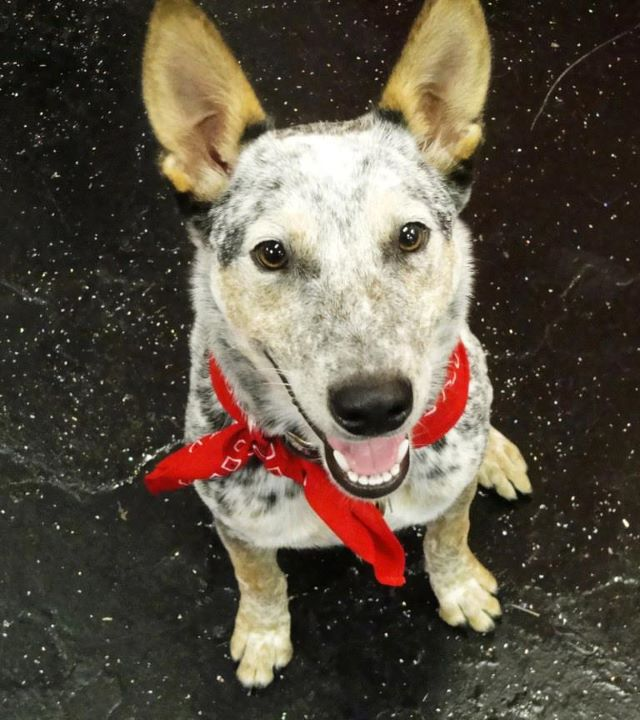 August, 2011 Successful Adoptions Video