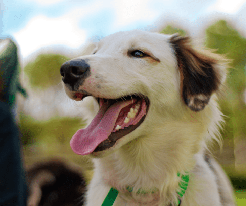 The Number One Favorite Family Dog ~ The Mixed Breed