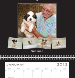 2012 TDL Wall Calendars