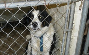 Huckleberry, rescued by Vicki from Clayton County, GA