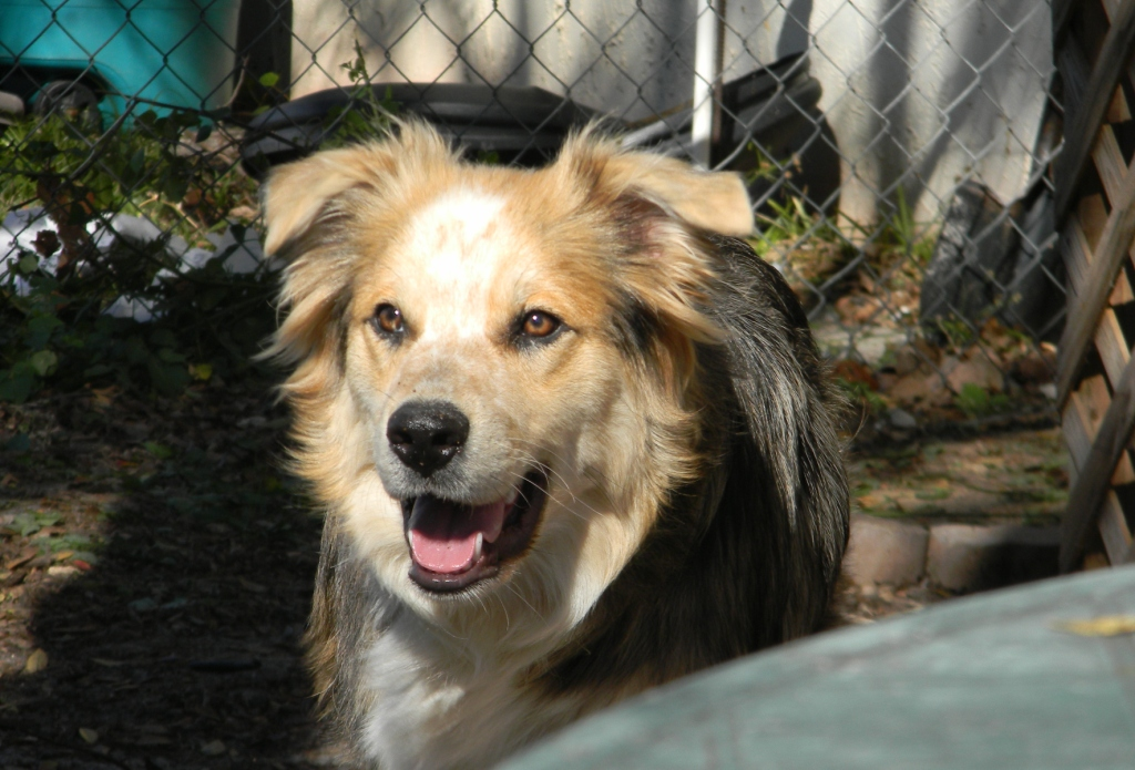 Heath~Adopted