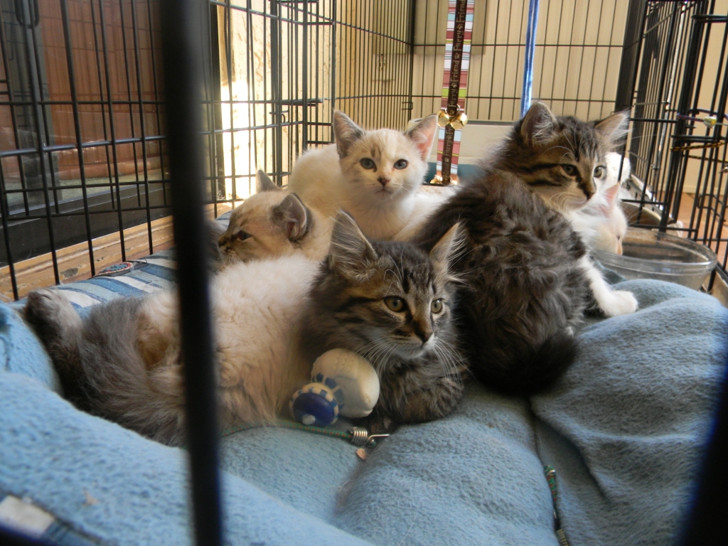 Kittens?  You What?  ~ Adopted!