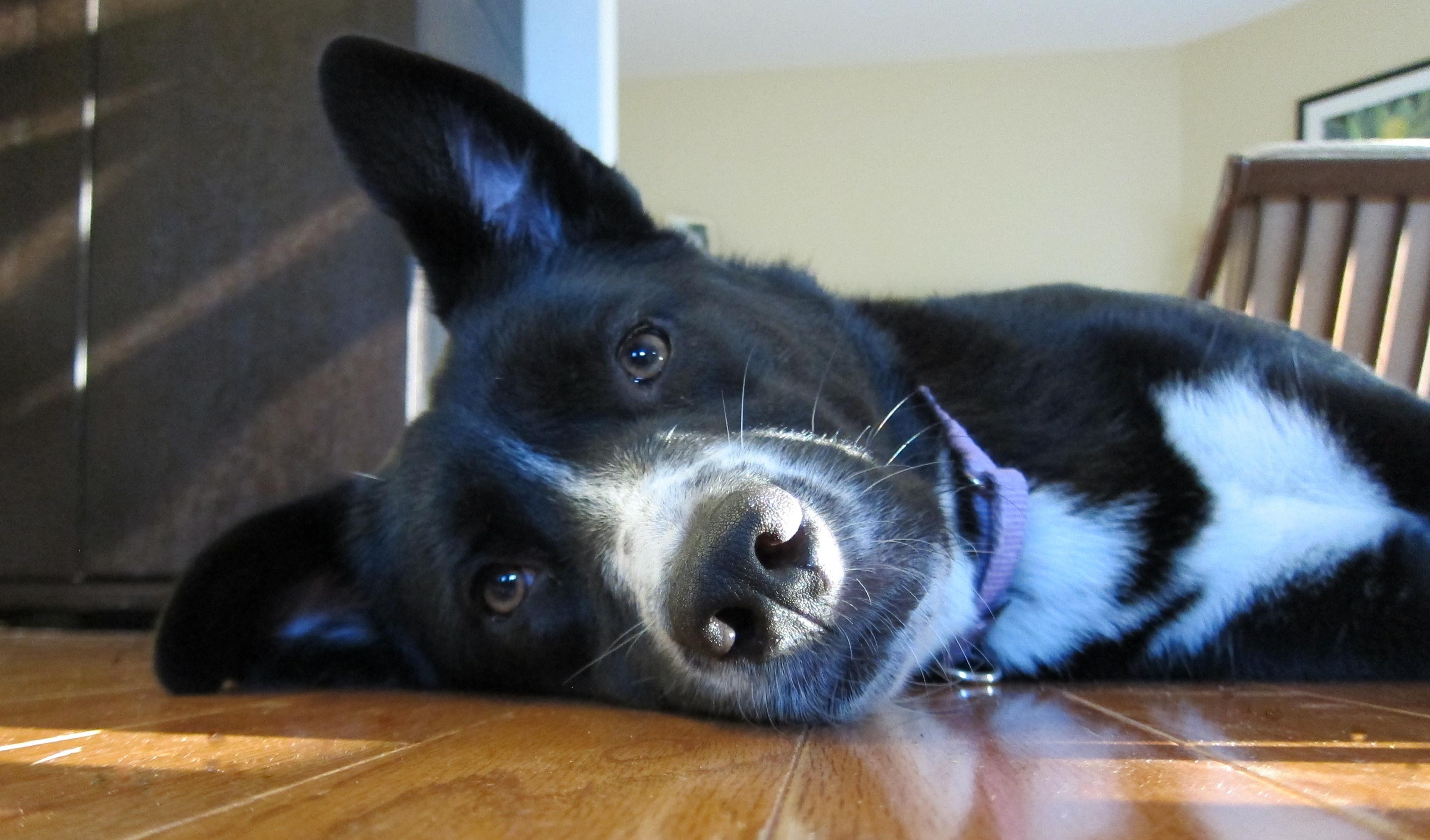 Reenie-Adopted