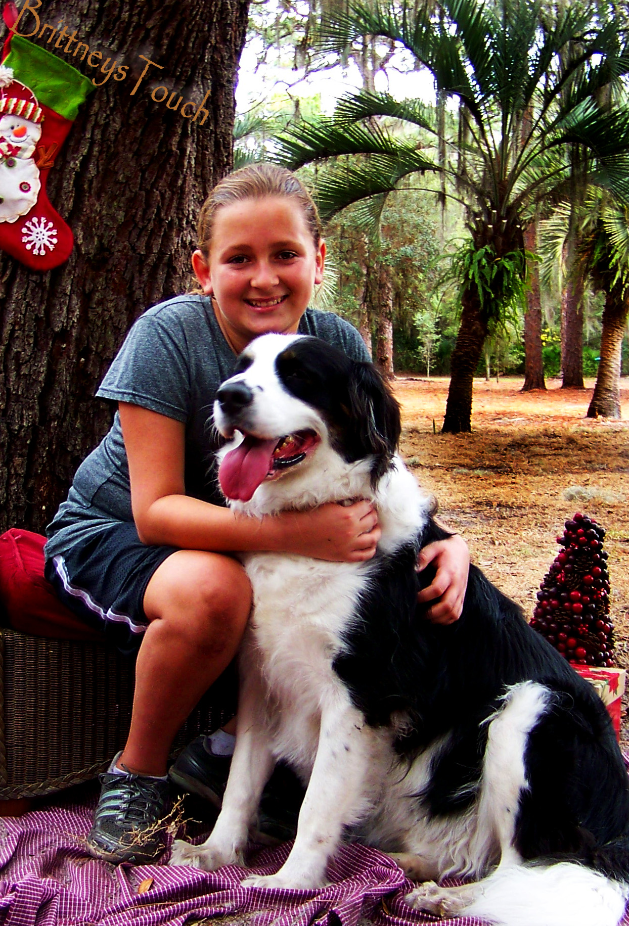 Dream Dog Search – Getting Started