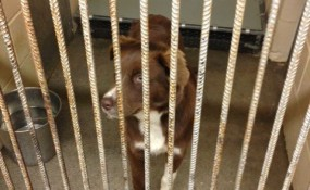 Clifford rescued from Clayton County, GA