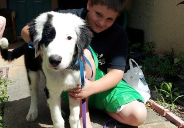 border collie rescue | The Dog Liberator™