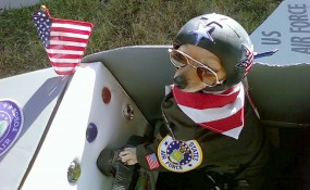 My Chihuahua's name is William He is dressed as a fighter pilot sitting in his plane sent in by Robyn Rose