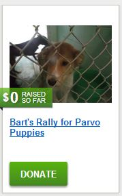 Bart's Rally for Parvo Puppies