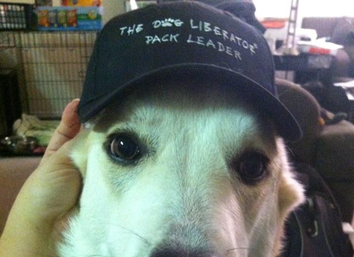 Wear The Dog Liberator!