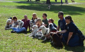 Aussie Adopters line up for a photo shot at our 2013 reunion!  Join our team of dog-lovers and volunteer!