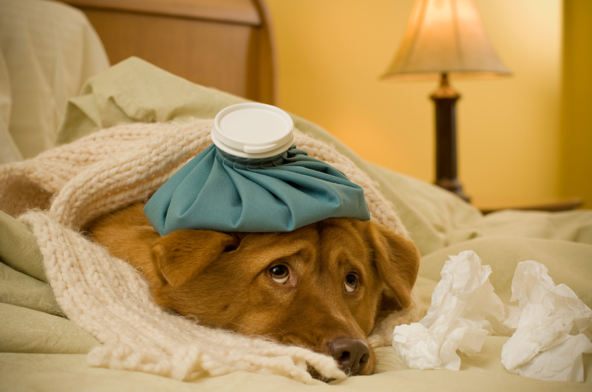 Get the Facts about Pain Relievers for Pets