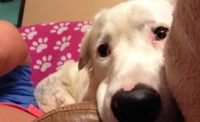 Yes, I am a velcro dog!