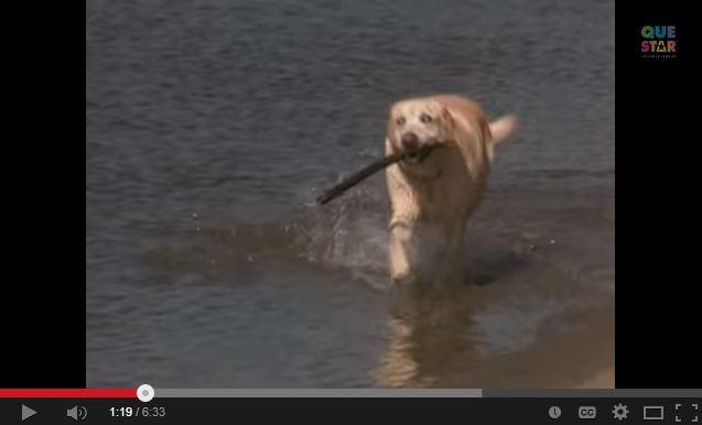 Blind Dog Saves Drowning Girl